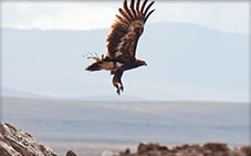 Bird of prey - Arusha National Park