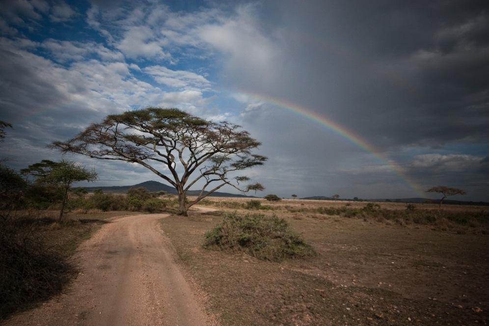Acacia Rainbow. Tarangire National Park. Photo by Andrew Knapp. Boma Africa