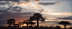 "African sunset. Photo by <a href=""https://www.flickr.com/photos/paulshaffner/2398623722/in/photostream"" target=""blank_"">Paul Shaffner</a>"