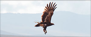 Bird of Prey - Crater Highlands