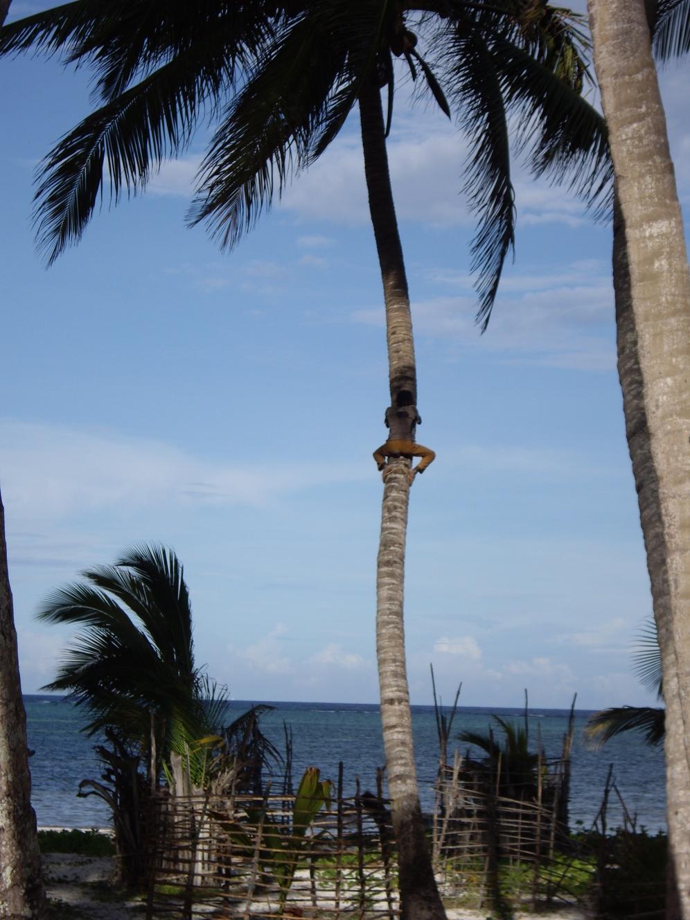 palm tree zanzibar beach glacier boma africa safari tanzania kilimanjaro wildlife