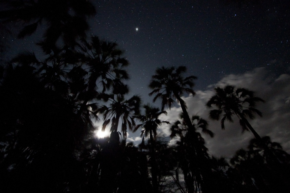 Stars & Palms, Lake Eyasi. Photo by Andrew Knapp. Boma Africa
