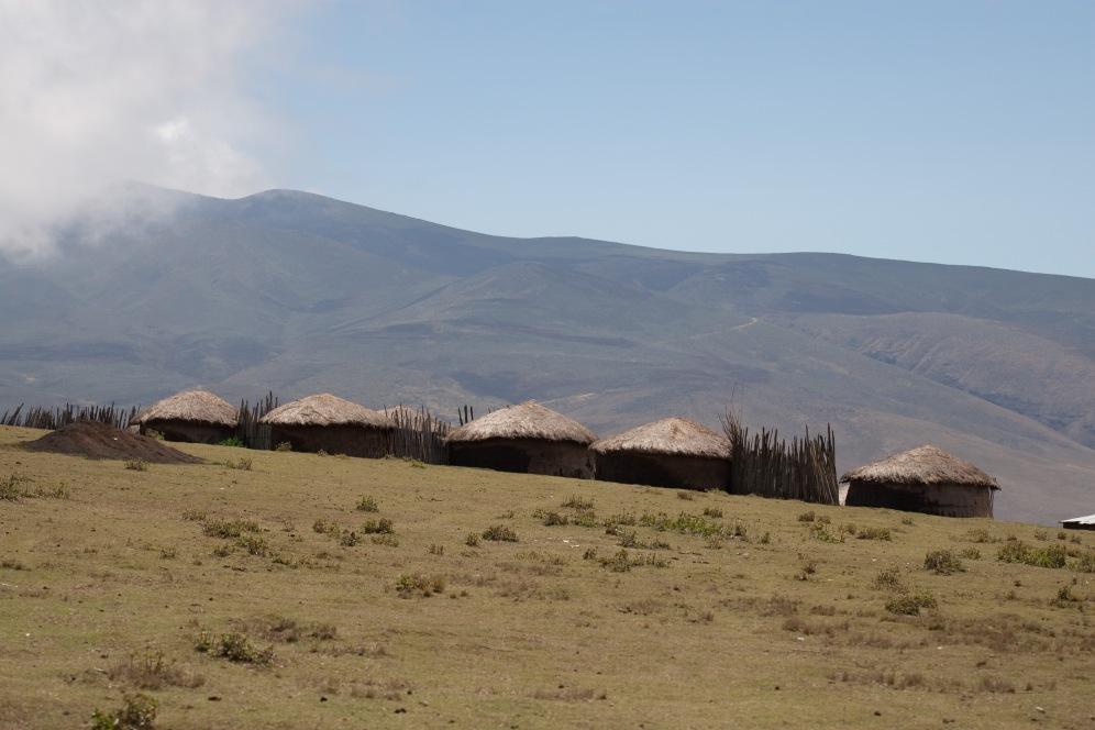 Ngorongoro Highlandsglacier boma africa safari tanzania kilimanjaro wildlife mountain