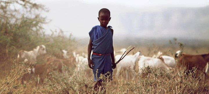 maasai goat boma africa safari tanzania kilimanjaro wildlife tribe