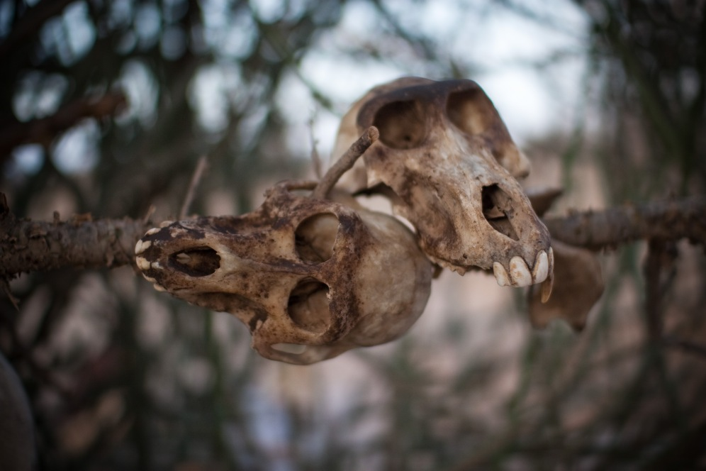 skulls- knapp- culture- picture- boma africa
