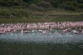 flamingos-ngorongoro-hilands-knapp-trekking-boma-africa