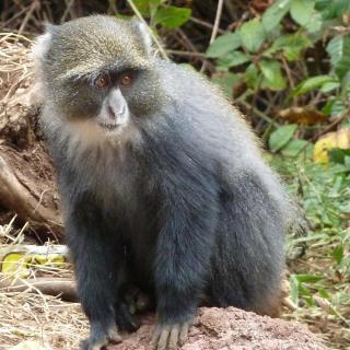 boma africa ngorongoro tanzania non profit tourism serengeti kilimanjaro safari lion cub christmas travel adventure game drive wildlife sykes monkey